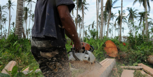 cutting trees on your own land in the philippines
