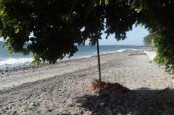 beach lot in dauin