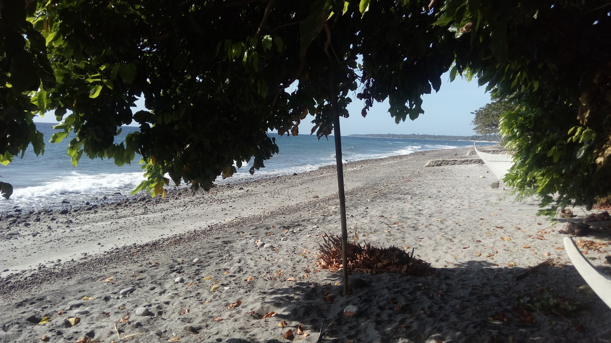 BEACH LOT IN DAUIN FOR DEVELOPMENT