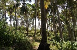 siquijor land for sale