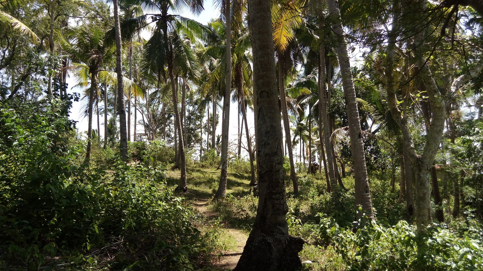 SIQUIJOR LAND FOR SALE ALONG HIGHWAY
