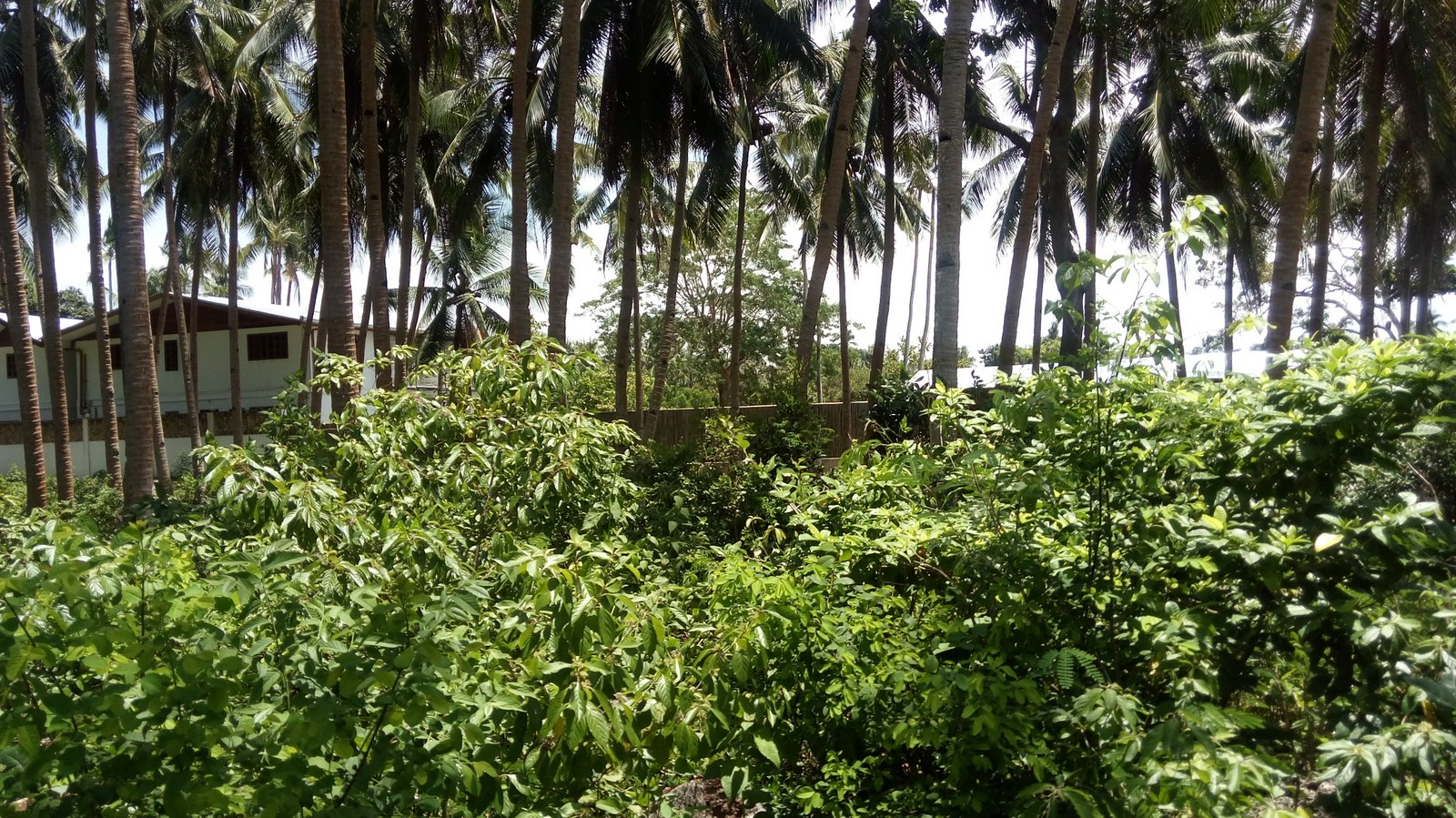SIQUIJOR LOT WITH BEACH ACCESS