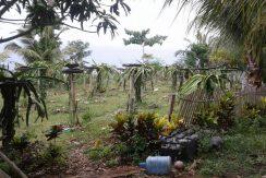 House and Lot Lower Cabangcalan, Lazi, Siquijor (18)