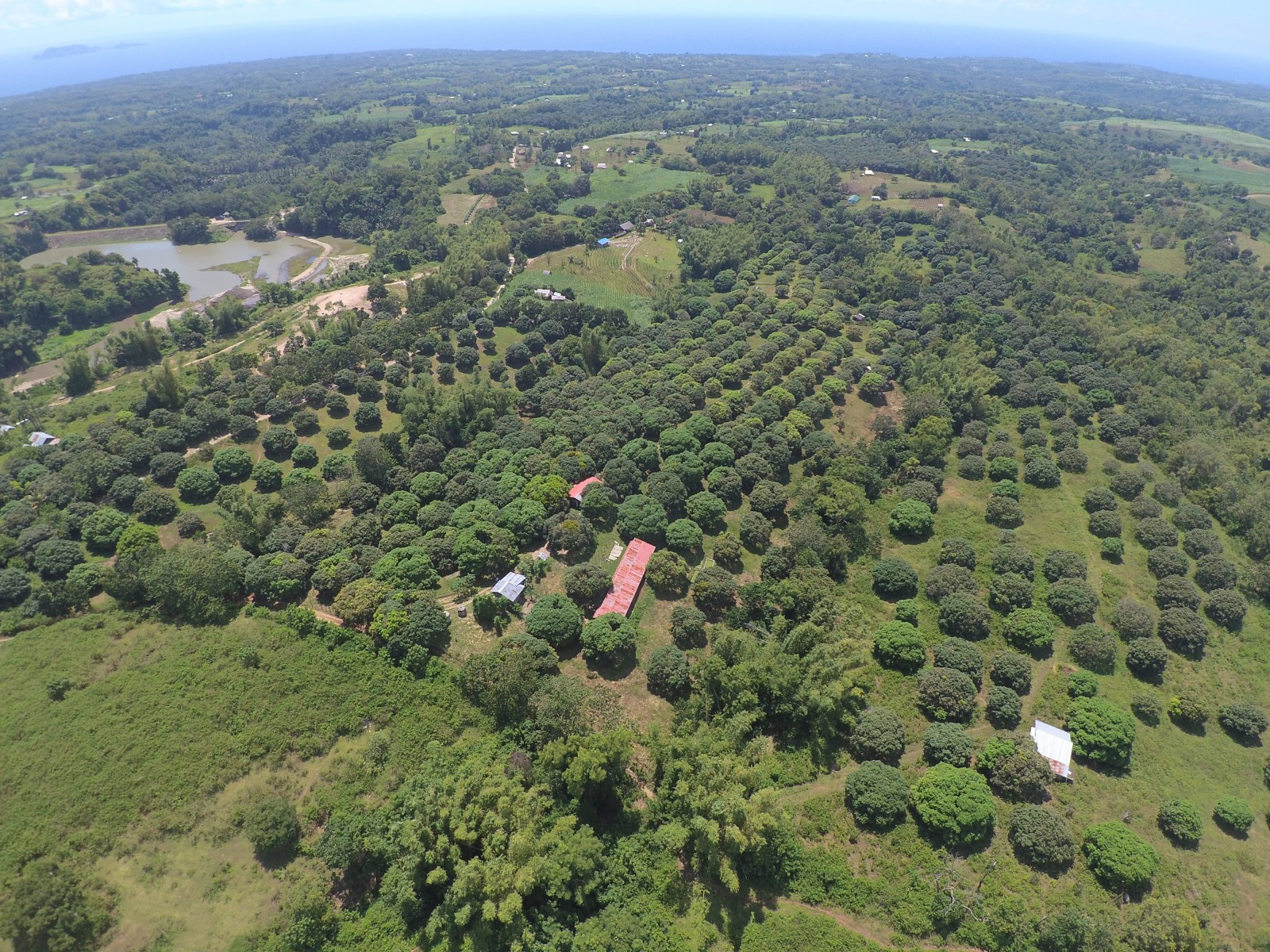 Farm For Sale in Zamboanguita