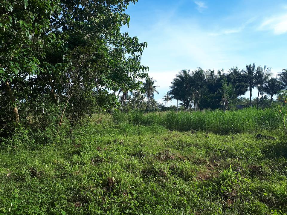 LOT FOR SALE IN BACONG