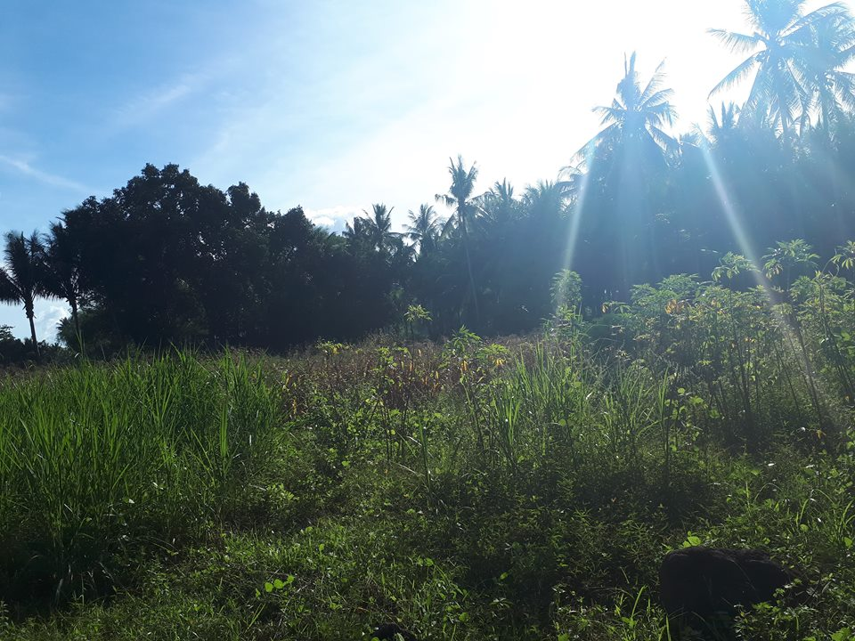 LOT FOR SALE IN BACONG ALONG ROAD