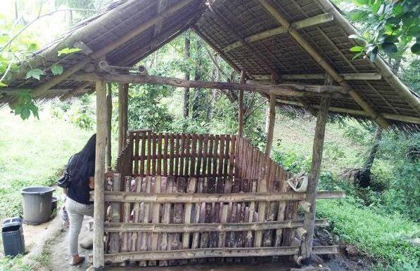 Bunawon_Land_2016.08.01_pigs-4-597x447