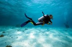 dive shop business opportunity