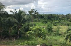 lot for sale in dauin